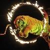 Цирки в Кокуе